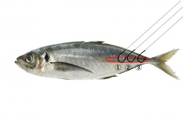 ヤエン釣りでアジが潜らない時はオトリフックの付け方を変えよう