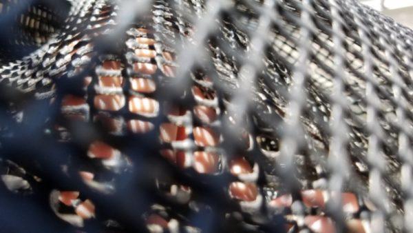 【アオリイカ用スカリ決定版】ウツボに襲われないアオリイカ専用スカリ