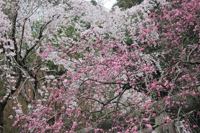 大豊神社へ行こう!干支(ねずみ)を祀る神社は京都にある