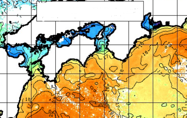 アオリイカ爆釣!時期 海況解析して釣れない症候群から脱出