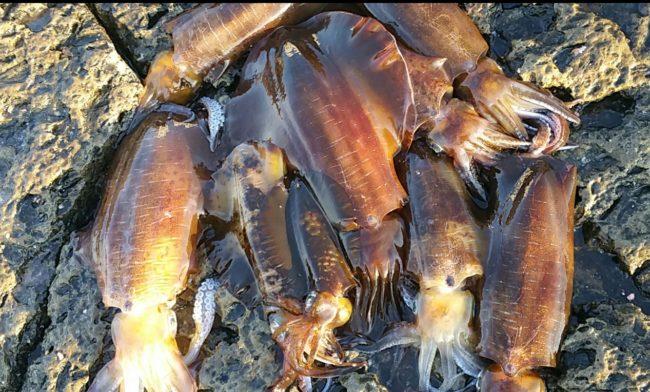 この春 差がつく!アオリイカ釣りは時間と潮で爆釣する【入門編】