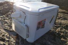アオリイカの釣果は出た?水温下がる和歌山を攻略してきた