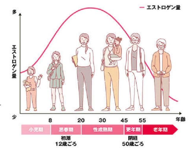 女性のホルモンのバランスグラフ