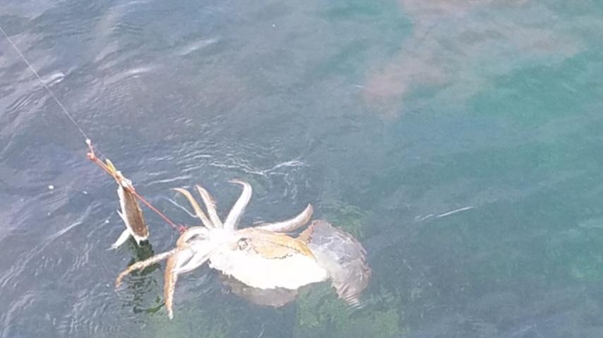 逆さ針が春イカを捕らえた!